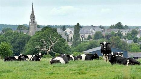 Prix du lait. Les éleveurs incités à relancer la production | Agriculture d'Ille-et-Vilaine | Scoop.it