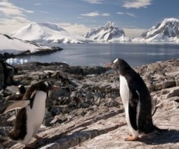 It's getting warm in Antarctica, but mining still a pipe dream | MINING.com | Sustain Our Earth | Scoop.it