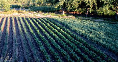 FAO promueve transitar hacia una agricultura climáticamente ...   Agricultura   Scoop.it