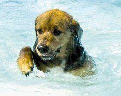Pet Talk: Pool Safety   Safety   Scoop.it