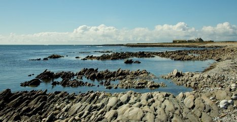 Molène : un projet d'activité aquacole durable   Enezgreen   Algues en Bretagne   Scoop.it