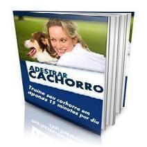 Adestrar Cachorro - Como educar seu cão Veja Como!!   Quickpeliculas   Scoop.it