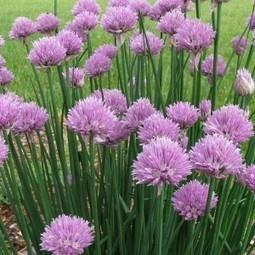 Jardin : astuces naturelles de jardinage ! - Bien-être au naturel | 694028 | Scoop.it