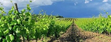 Desarrollan un software para la producción hortícola, vitivinícola y de remolacha azucarera | Agricultura y Ganaderia | Scoop.it