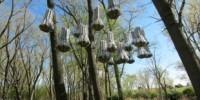 A Cloud for Bats | The Scientist | Pollinators: a plant focus, for backyards | Scoop.it