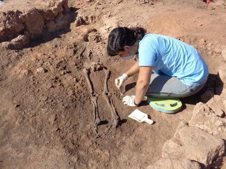 Aparece un cuarto esqueleto del periodo ibérico en el yacimiento de La Celadilla, (Ademuz, Valencia) | Soft skills in labour market | Scoop.it