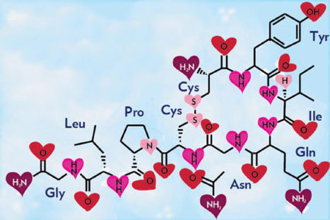 Love Hormone Oxytocin Can Cause Emotional Pain, New Study Says   Neuroscience   Sci-News.com   Mind and Brain   Scoop.it