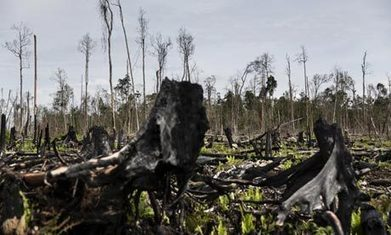 'Indonesia is seeing a new corporate colonialism'   Save and Protect the Rainforests   Scoop.it