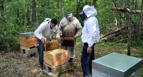 Les abeilles restent «connectées»  au domaine de Gueyze   Le vin quotidien   Scoop.it