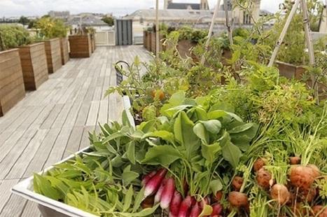 Quand les hôpitaux produisent leurs fruits et légumes | Des 4 coins du monde | Scoop.it