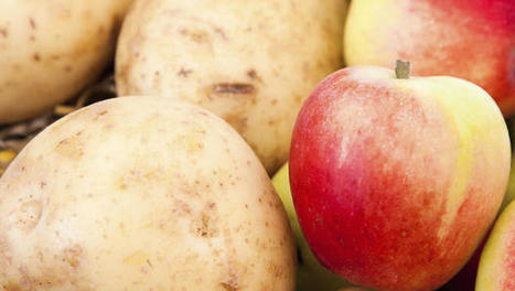 Genetically modified apples, potatoes win FDA approval | INTRODUCTION TO THE SOCIAL SCIENCES DIGITAL TEXTBOOK(PSYCHOLOGY-ECONOMICS-SOCIOLOGY):MIKE BUSARELLO | Scoop.it