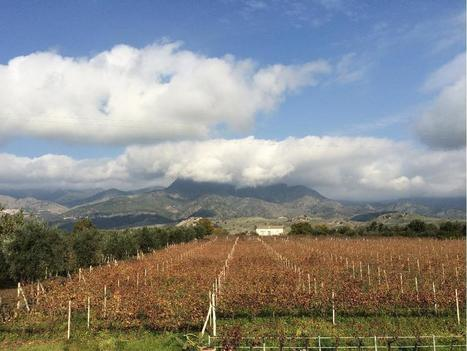 The Other Side of Sicily Produces Lighter, More Fragrant Wines. | Food and Wine | Scoop.it