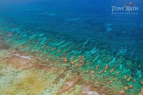 The Belize Barrier Reef Series | Belize in Social Media | Scoop.it