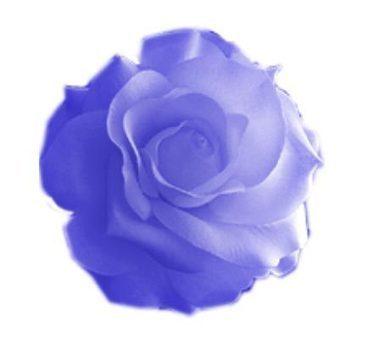 Hướng dẫn cách tạo brush hoa hồng trong Photoshop | zippo nhật | Scoop.it