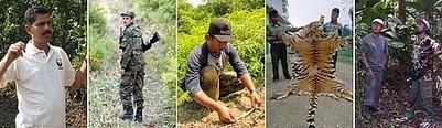 WWF & Saving Tigers | Tiger Conservation | Scoop.it