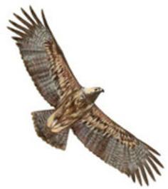 SEO/BirdLife | Partido Popular, una visión crítica | Scoop.it
