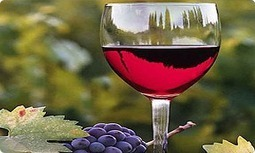 Mini Bus Hire Perth   Bus Charters Perth   Perth Airport Shuttle   Wine Tours Perth   Promote Perth Design   Scoop.it