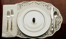"""HowStuffWorks """"Benefits of Eating Bugs"""" 