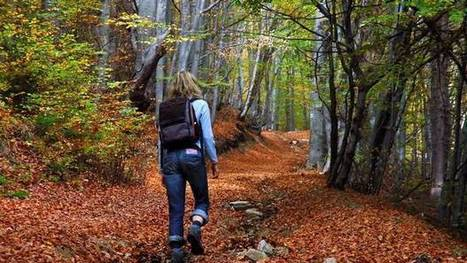 Why is walking in the woods so good for you? - #hiking #activewalkingtrips | Hiking Vacations | Scoop.it