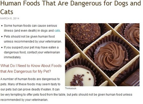 Except Life's Abundance Dog Food or Cat Food, Never Feed These to Pets | Healthy Pet Foods Online | Scoop.it