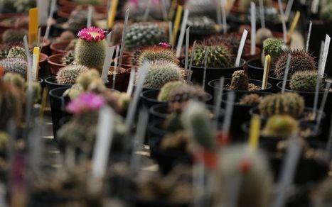 Environnement : une plante sur cinq menacée d'extinction dans le monde | Economie Responsable et Consommation Collaborative | Scoop.it