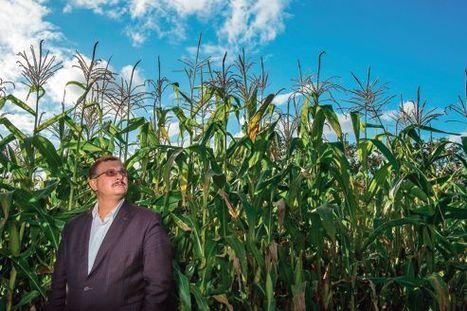 OGM : «L'étude Séralini ne remet rien en cause» | Les souris du Pr Seralini et les OGM | Scoop.it