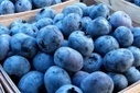 10 Superfoods You Should Add to Your Diet | Nerve Health | Scoop.it