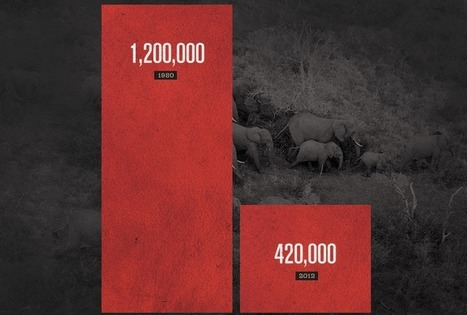 Elephants Being Slaughtered for Ivory Faster Than They Can Reproduce | Conservation | Scoop.it