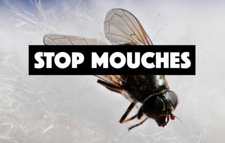 Comment lutter contre les mouches en fabriquant un piège - Astuces de grand mère | Camping-Suisse.info | Scoop.it