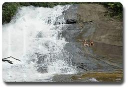 Guyane Excursion   Le Tourisme en Guyane   Scoop.it