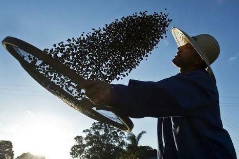 Le Brésil mise sur le charme de son café de qualité | Coffee News | Scoop.it