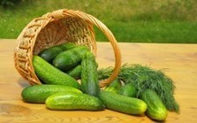 15 Health Benefits of Cucumbers: Grow Your Own Cooling Food | Medicine and Health | Scoop.it