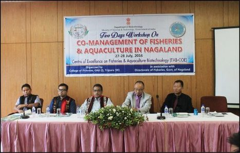 Fisheries & aquaculture prospect in Nagaland | Aquaculture Directory | Aquaculture Directory | Scoop.it