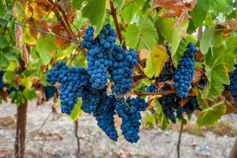 Hopes high for a vintage Port year | Vitabella Wine Daily Gossip | Scoop.it