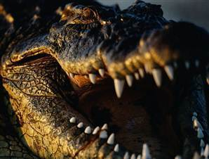 Largest known croc likely fed on early man | Topics of my interest | Scoop.it