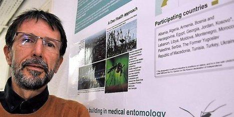 "Virus Zika : ""La recherche est en pleine phase d'observation"" | EntomoScience | Scoop.it"