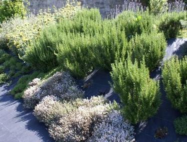 Um jardim para cuidar: Poupe água ! escolha plantas resistentes à secura ! | paisajismo | Scoop.it