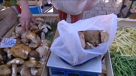 Le cèpe, star du marché de Périgueux | Agriculture en Dordogne | Scoop.it
