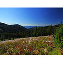 Nationally Recognized North Idaho Forests Conserved | Timberland Investment | Scoop.it