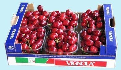 Italiaanse Vignola kersen 10 dagen later | La Gazzetta Di Lella - News From Italy - Italiaans Nieuws | Scoop.it