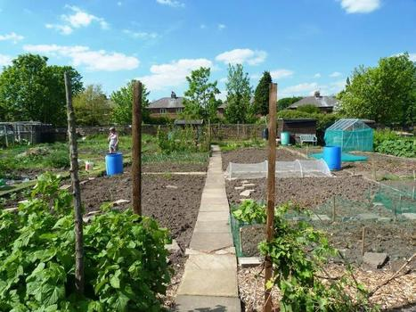 Allotments yield food and healthy soil, study finds - Phys.Org | Shift Soil Remediation | Scoop.it