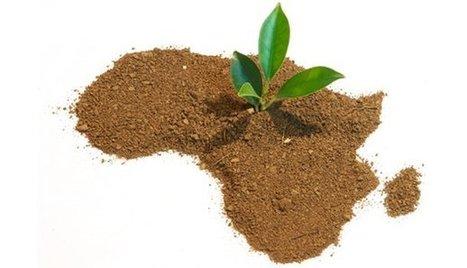L'extraordinaire potentiel de l'agriculture africaine, à l'aune du numérique. | Agriculture durable et protection des cultures | Scoop.it