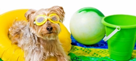 Pet Care Summer Safety Series: Heat Stroke – Part 2 | Aussie Pet Mobile | Worlds Number 1 Pet Services Franchise and Pet Grooming Business | Pet Care tips | Scoop.it