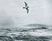 Plankton make scents for seabirds and a cooler planet | Sustain Our Earth | Scoop.it