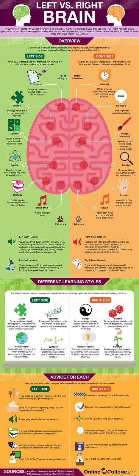 Left Brain vs. Right Brain | Tomorrow's Web and Techno | Scoop.it