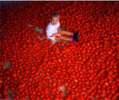Tomatoes: GM, Aroma And Tradition | AnnBot | Scoop.it