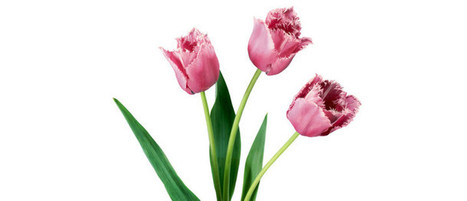 Show Your Love and Affection by Sending Flower to all your Loved One | Floristperth | Scoop.it