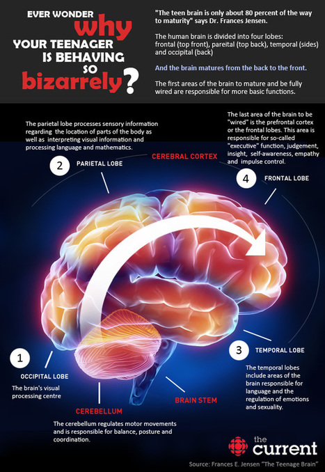 The Teenage Brain: Uniquely powerful, vulnerable, not fully developed | Learning & Mind & Brain | Scoop.it