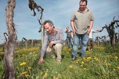 Viticulture : objectif zéro herbicide | Agriculture en Dordogne | Scoop.it