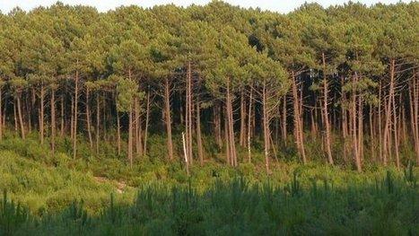 Réchauffement climatique : comment protéger la forêt et les vignes en Aquitaine ? | Agriculture en Dordogne | Scoop.it